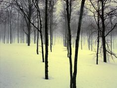 young trees in the snow.