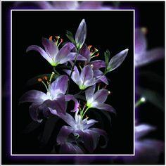gif winter photo by Victor_Coj Animated Screensavers, Animated Gif, Diy Flowers, Purple Flowers, Lilies Flowers, Gifs, Lighthouse Art, Gif Photo, Create Photo