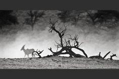 The Settling Dust My Photos, Moose Art, Photography, Photograph, Fotografie, Photoshoot, Fotografia