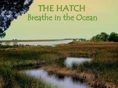 The Hatch - Breathe in the ocean.  Steinhatchee, FL