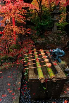 雨の週末。 桜のころは恨みの雨ですが、紅葉には恵みの雨ですね。  彩り鮮やかだった亀岡・鍬山神社の紅葉をお届けします。  (※11月8日撮影) ...