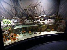 Gotta be the nicest goldfish tank ever