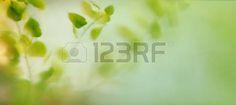 foglie: blur and soft focus  leaves through transparent window Archivio Fotografico