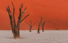 From the Namibia desert, a 4 different stacking focus images at f 2,8  by using Zeiss Otus 85mm from the Deadvlei in Namibia. Soon we will announce our first workshop in #Namibia.  Please visit my website for more details. http://www.danyeid.com/