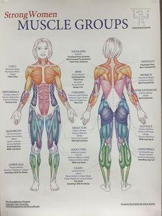 Study what you like anatomy for artists, anatomy art, anatomy study, anatomy poses Anatomy Study, Anatomy Drawing, Anatomy Art, Anatomy Poses, Human Muscle Anatomy, Human Anatomy And Physiology, Leg Muscles Anatomy, Human Body Muscles, Muscular System