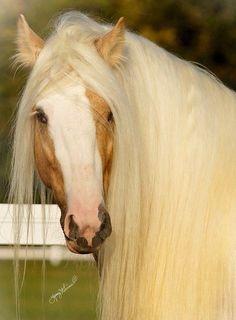 Fabiola of horses