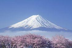 As mais lindas flores de cereja ao redor do mundo   Revelando Ideias