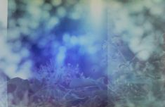 #lomography #lomo #alternativeprocess #alternativephotography #experimental #experimentalphotography #film #filmphoto #filmphotography #filmphotograph #analog #analogphotography #analoguephotography #analogue #filmcommunity #filmisalive #filmforever #believeinfilm #longlivefilm #ishootfilm #shootfilmstaybroke #filmwillneverdie #filmisnotdead #alteranalog #progressivefilm #damagedfilm #destroyedfilm #soakedfilm Italian Buffet, Seo Software, Alternative Photography, Crypto Bitcoin, Cheap Homecoming Dresses, Experimental Photography, Dc Weddings, Lomography, Film Photography