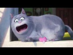 The Secret Life Of Pets - Chloe Best Moments [HD] - YouTube