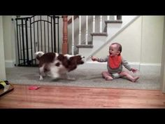 May 12, 2014 Adorable laughing baby and Cavalier King Charles playing game - YouTube