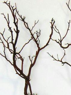 Dark reddish brown branches