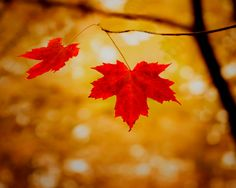 Bright+red+leaves+photography+woodland+rustic+decor+by+bomobob,+$30.00