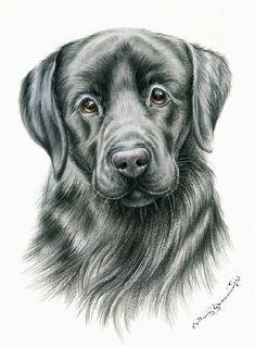 Dogs Black Labrador Irina Garmashova