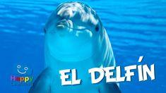 El Delfín | Videos Educativos para Niños