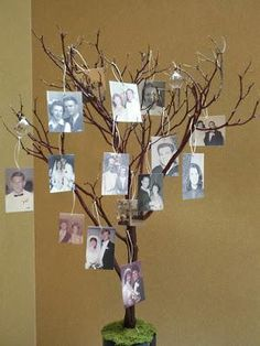 Les branches d'arbres