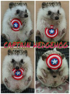 Hello captain