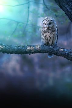 An owl knows all the secrets of the forest, but tells them in a voice we cannot understand.