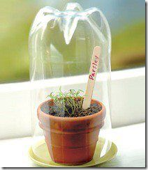 Recycle your plastic soda and water bottles. Turn them into petite window sill greenhouses for starting seedlings! From Mark Lipinski's Facebook Fan Page!