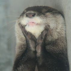 You Otter Be Kidding Me Hahaha | Cutest Paw