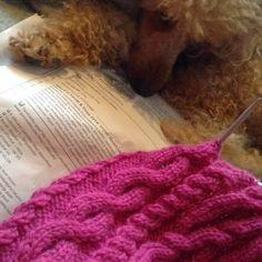 Käsityö Onni Poodles, Blanket, Crochet, Dogs, Animals, Animais, Animales, Standard Poodles, Animaux