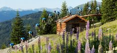 Can this be my office? Bike Events, Bike Quotes, Bike Parking, Trail Maps, Cabin, Outdoor, Mountains, House Styles, Pictures