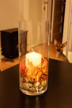 Fun to collect nuts with the kids! Fall Mason Jars, Mason Jar Crafts, Harvest Time, Fall Harvest, Candle Arrangements, Seasonal Celebration, Pumpkin Centerpieces, Pumpkin Lights, Pregnancy Gifts