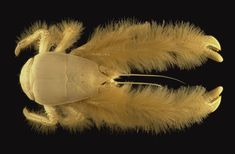 Yeti Crab. Yeti Crabs were discovered in 2006--they live near hydrothermal vents under the water and get their food through chemosynthesis from the chemical emitted by the vents.