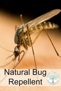 Summer is the time to be outdoors, but are those bugs buggin' you? Keep them at bay naturally with this easy to make blend! The Homesteading Hippy