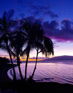Purple Reign ~ Hawaii