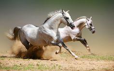 Horses Desktop Wallpaper Wallpaper