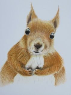 Coloured pencil drawing
