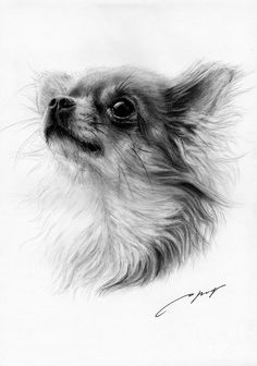 Chihuahua Drawing by Danguole Serstinskaja - Chihuahua Fine Art Prints and Posters for Sale Chihuahua Drawing, Chihuahua Tattoo, Chihuahua Art, Long Haired Chihuahua, Watercolor Canvas, Canvas Art, Dog Art, Animal Drawings, Pencil Drawings