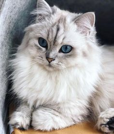 Exceptional funny cats information are available on our internet site. Read more… - Katzen Cute Baby Cats, Cute Cats And Kittens, Ragdoll Kittens, Cute Baby Animals, Kittens Cutest, Funny Animals, Tabby Cats, Bengal Cats, Pretty Cats