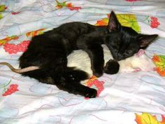 Kitten snuggling with a mouse!