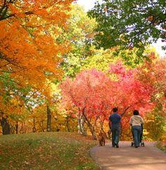 A beautiful autumn stroll through Chico, CA! www.coldwellbankerchico.com