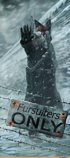 furry,фурри,фэндомы,furry art,wolfroad,furry fox