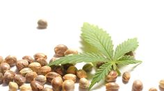 Irish Moss with Hemp Seed Milk - Learn How to Make It