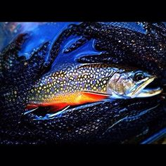 Tough to beat those colors #flyfishing #flytying #Troutbum #Colorado
