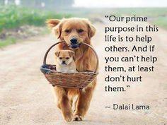 Wise words to live by. #wisdomwednesday