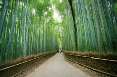 Arashiyama is Kyoto's second-most important sightseeing district. It's filled with temples, shrines and the famed Arashiyama Bamboo Grove.
