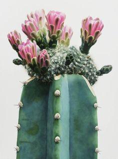 Natural Arizona Beauty