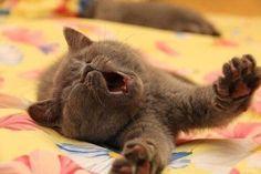 #Cats #Cat #Kittens #Kitten #Kitty #Pets #Pet #Meow #Moe #CuteCats #CuteCat #CuteKittens #CuteKitten #MeowMoe Good morning cutie ... http://www.meowmoe.com/12049/