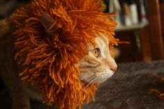 This is knit, but I thought I would share it for those of you that enjoy dressing up your cat. There's a free Cat's Mane pattern by Mer Almagro.