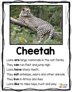 PRIMARY WRITING – kindergarten and first grade animal reports and informational writing – nonfiction reading and writing – zoo animals … Kindergarten Freebies, Kindergarten Science, Kindergarten Reading, 1st Grade Writing, First Grade Reading, Informational Writing, Nonfiction, Zoo Activities, Writing Activities