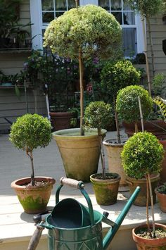 decora-tu-jardin-con-topiarios-06