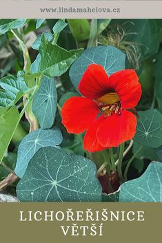 Korn, Herbalism, Health Fitness, Program, Garden, Plants, Herbal Medicine, Garten, Lawn And Garden