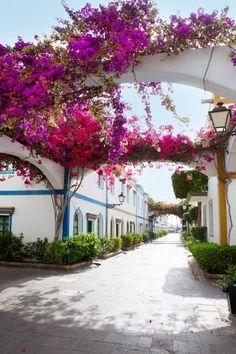 bougainvillea, Puerto De Mogán, Las Palmas, Canary Islands