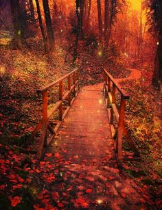 A walk with wonder.....