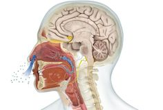Nanopollutants can hijack olfactory nerve cells and enter the brain ...
