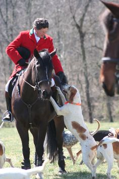 Fox Hunting!!! Love!